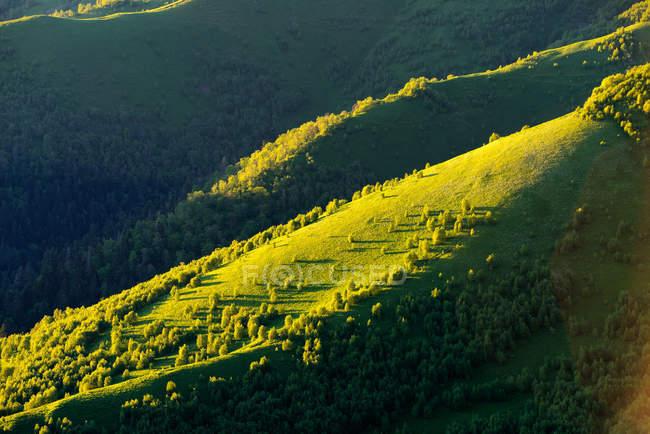 Зелені долини докладно, великий Thach природі парк, кавказьких гір, Республіка Адигея, Росія — стокове фото