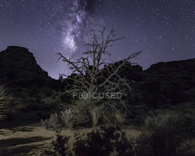 Joshua Tree And Starry Night Sky Joshua Tree National Park