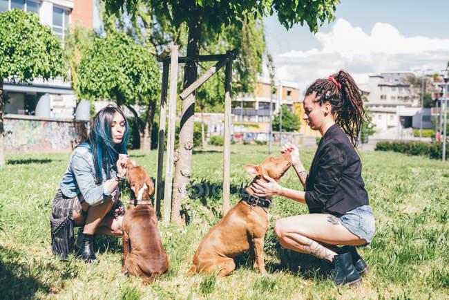 Две молодые женщины ласкают питбулей в городском парке — стоковое фото