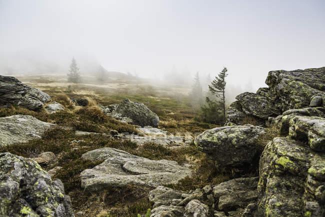 Туман на горе Арбер, Боденмайс, Бавария, Германия — стоковое фото