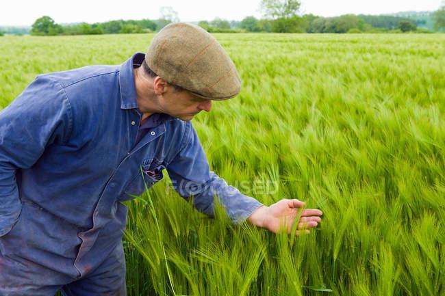 Landwirt inspiziert grünes Gerstenfeld — Stockfoto