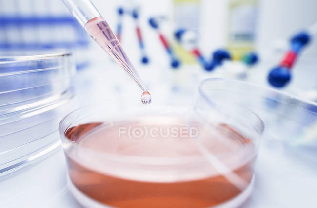 Pipette transferring solution into petri dish — Stock Photo