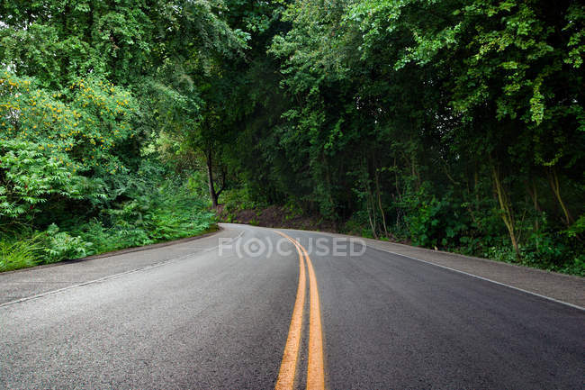 Curving road in lush green forest — Stock Photo