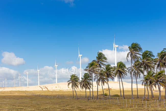 Wind turbines and palms under blue sky — Stock Photo