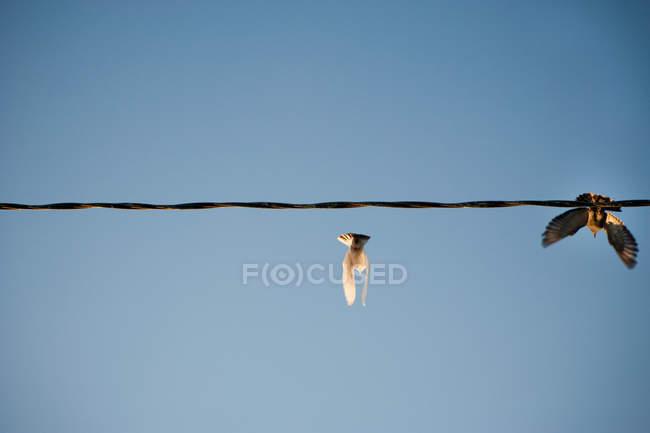 Oiseaux volant à partir de la ligne électrique contre ciel clair — Photo de stock