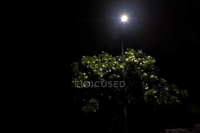View of bushes in moonlight — Stock Photo