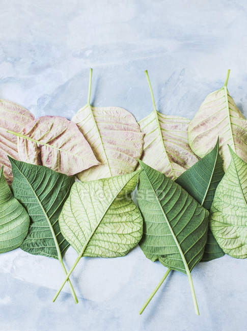 Studio shot, overhead view of leaves upside down in rows — Stock Photo