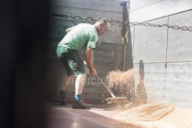 Чоловічий фермер підмітає пшеницю в трейлері. — стокове фото