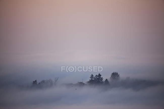 Силуетними дерев, які виходять з низьким хмара — стокове фото