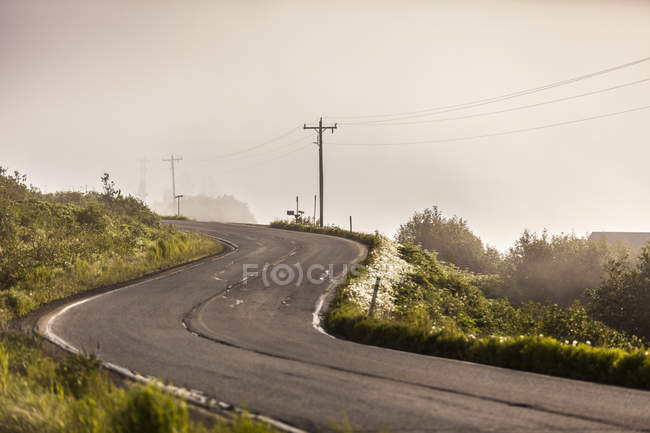 Mist winding open road surrounded by greenery — Foto stock