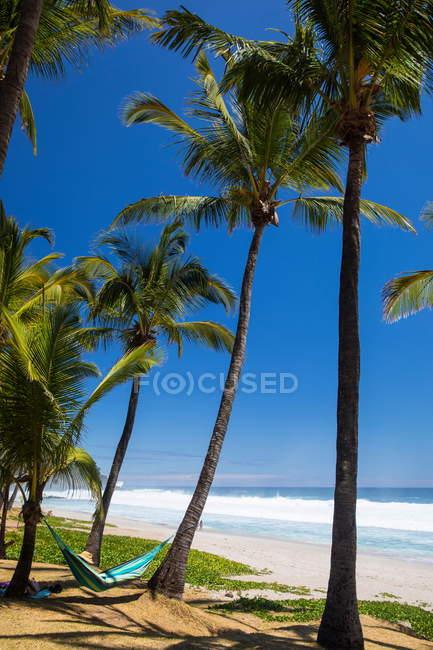 Мужской турист, лежащий на гамаке у Индийского океана, остров Реюньон — стоковое фото