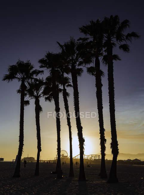 Силуети пальмами, Санта-Моніка, Каліфорнія, США — стокове фото