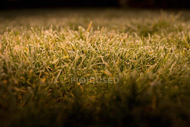 Мороз на траве, заделывают выстрел — стоковое фото
