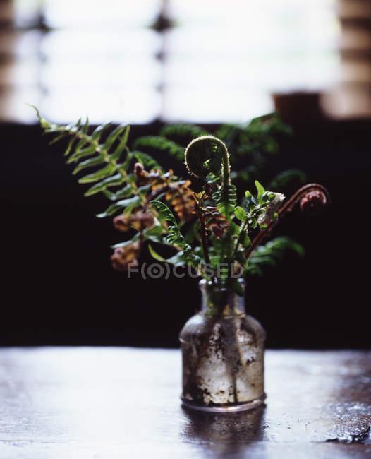 Samambaias na velha garrafa de vidro, iluminado por luz natural que vem pela janela — Fotografia de Stock