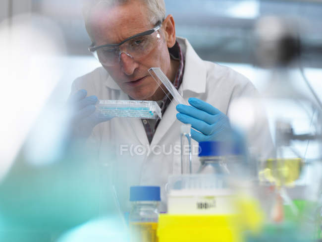 Biotechnology Research, scientist viewing samples in a multi well plate during an experiment in the laboratory — Stock Photo