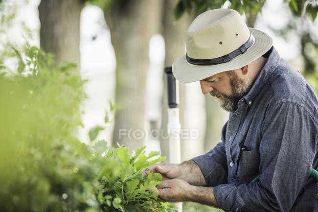 Wissenschaftler untersuchen Pflanzen an Pflanze Wachstum Forschungseinrichtung — Stockfoto