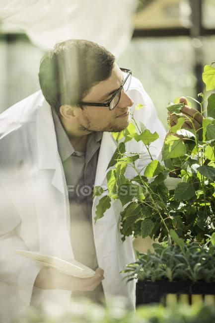 Wissenschaftler untersuchen Pflanze Pflanze Wachstum Forschung Einrichtung Gewächshaus — Stockfoto