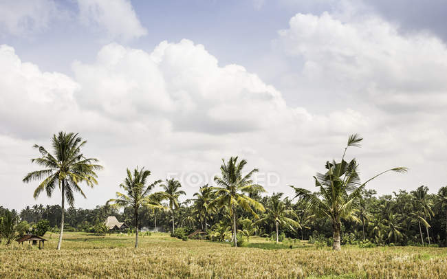 Paysage avec palmiers, Gili Meno, Lombok, Indonésie — Photo de stock