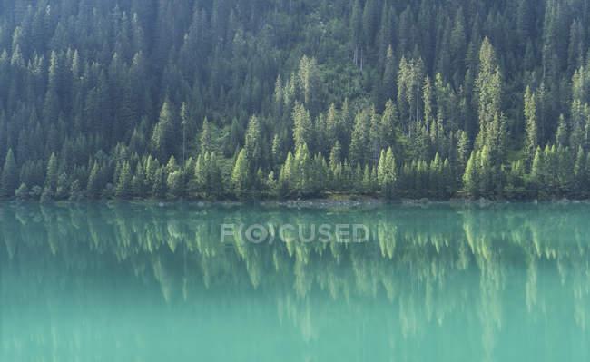 Pinheiros que refletem no lago de montanha água verde — Fotografia de Stock