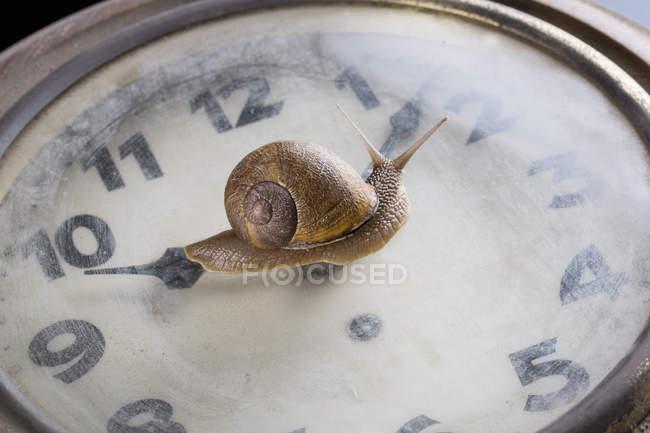 Escargot se déplaçant sur la surface de la vieille horloge — Photo de stock