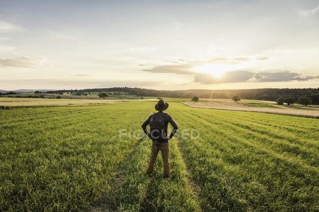 Mid adult man, standing in field, rear view — Stock Photo