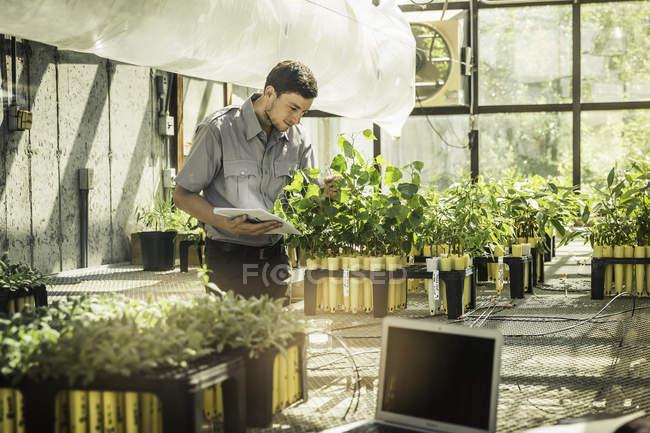 Wissenschaftler untersuchen Pflanzen in Pflanze Wachstum Forschung Einrichtung Gewächshaus — Stockfoto