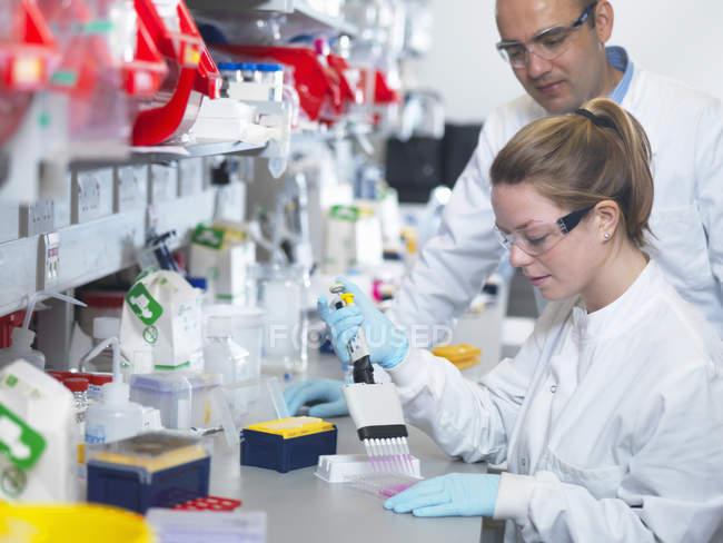 Cientista que usa a pipeta multicanal para encher a placa multiwell para a análise de anticorpos pelo ensaio de ELISA — Fotografia de Stock