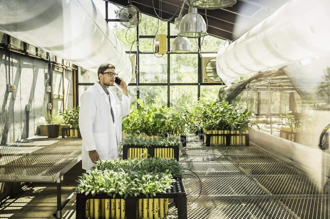 Wissenschaftler sprechen auf Smartphone bei Pflanze Wachstum Forschung Einrichtung Gewächshaus — Stockfoto