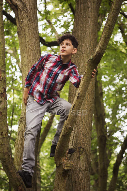 Verticale d'adolescent restant dans l'arbre — Photo de stock