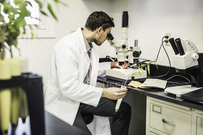 Wissenschaftler suchen durch Mikroskop in Pflanze Wachstum Forschungslabor Zentrum — Stockfoto