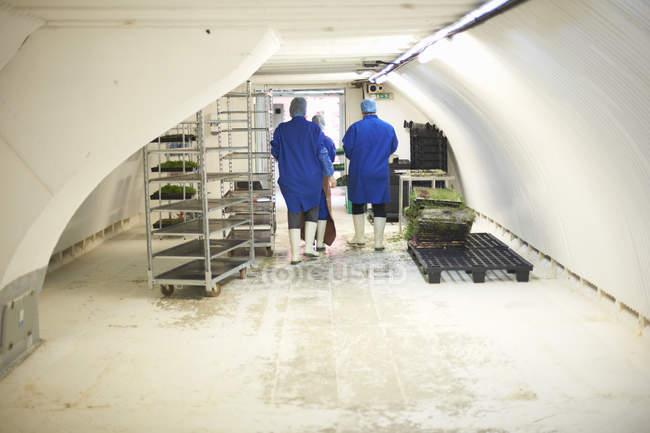 Задній вигляд робітників у підземній тунельні насіннєвий лоток для дитячих кімнат, Лондон, Великобританія — стокове фото