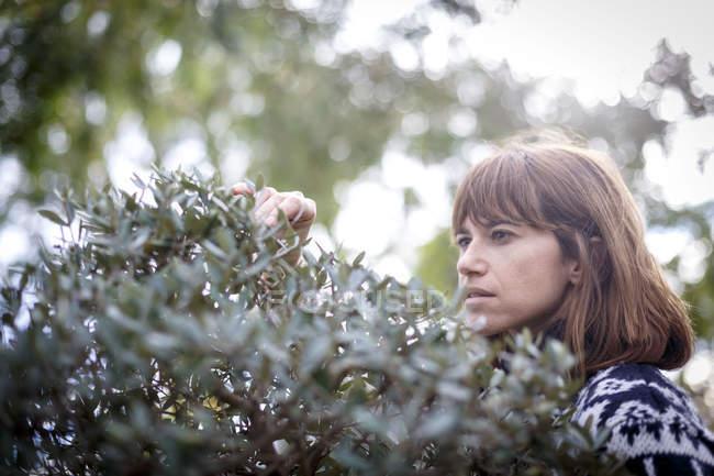 Mulher colhendo folhas de bush — Fotografia de Stock