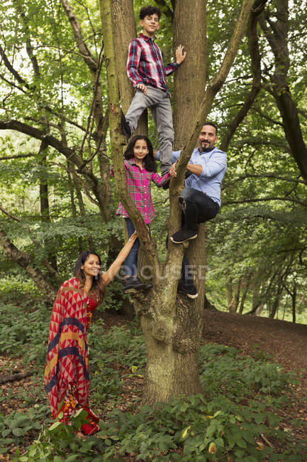 Portrait de famille en forêt, père et deux enfants grimpant à l'arbre — Photo de stock
