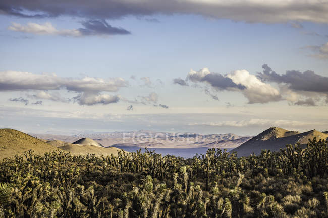 Landschaft mit Kakteen in Death Valley Nationalpark, Kalifornien, Usa — Stockfoto