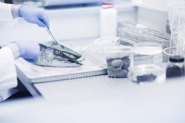 Scientist analysing fish sample in laboratory — Stock Photo