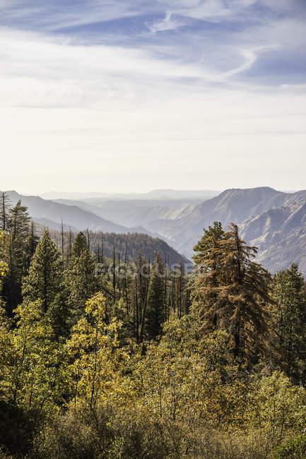 Vista panoramica elevata della foresta e delle montagne, Yosemite National Park, California, USA — Foto stock