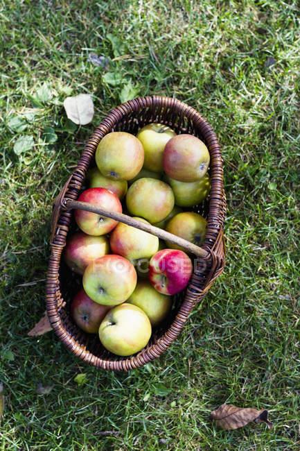 Frische hausgemachte Äpfel im Korb — Stockfoto