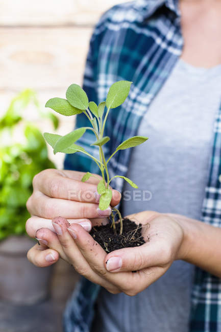 Woman holding seedling, close up — Stock Photo
