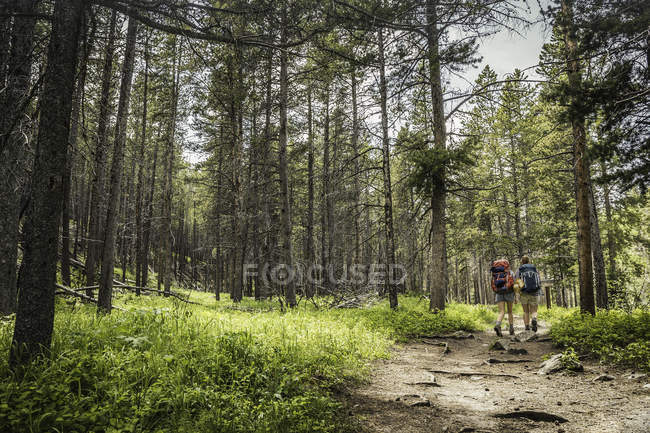 Rear view of teenage girl and young female hiker hiking in forest, Red Lodge, Montana, USA — Stock Photo