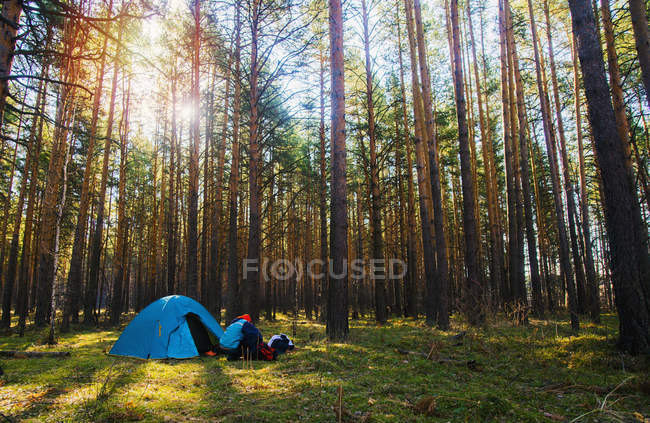 Woman by tent pitched in forest u2014 Stock Photo & Woman by tent pitched in forest u2014 one person young woman - Stock ...