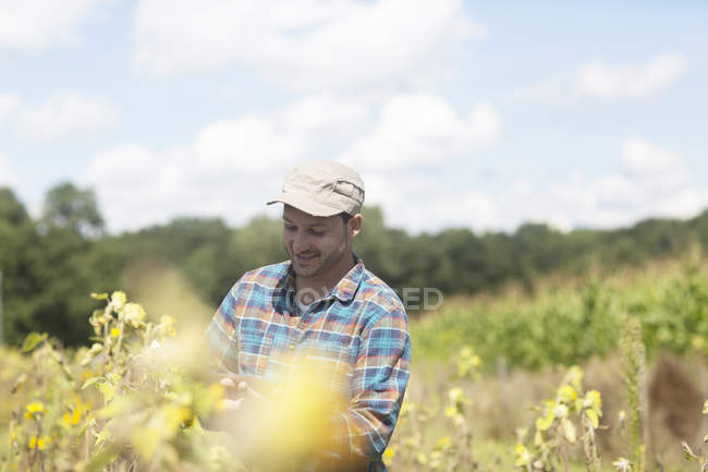 Farmer quality checking plant crop — Stock Photo