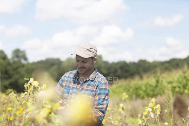 Landwirt überprüft Pflanzenernte — Stockfoto