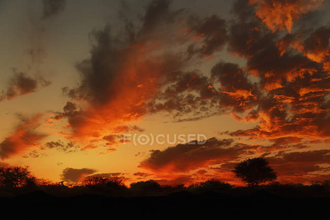 Scenic view of Silhouetted tree at sunset, Namibia — Stock Photo