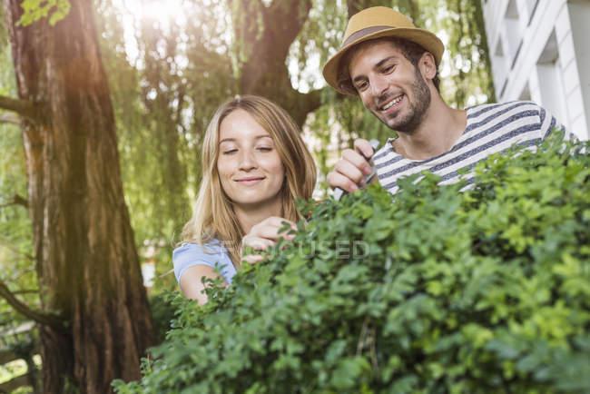 Arbusto de poda do jovem casal no jardim — Fotografia de Stock