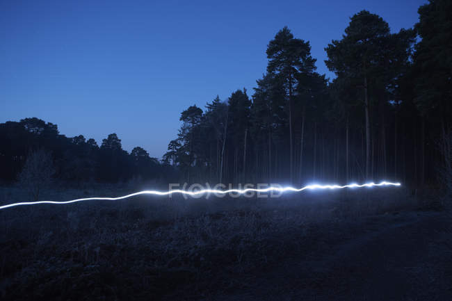 Light trail in forest, at night — Stock Photo