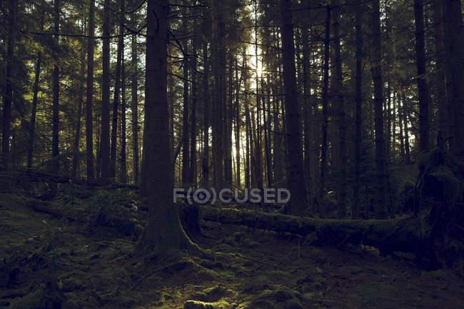 Шайбы Глен, Dunoon, Аргайл и Бьют, Шотландия . — стоковое фото