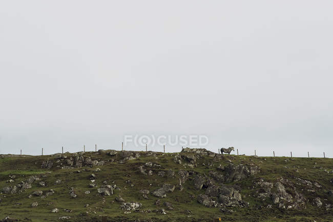 Кінь стоїть на пагорбі острова Льюїс, Західне узбережжя Шотландії — стокове фото