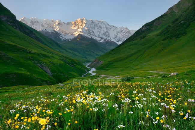 Вид диких квітів Луки та Shkhara гори, Ushguli села, Сванеті, Грузія — стокове фото
