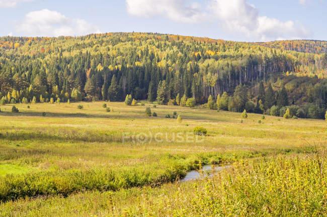 Живописный вид на поле и деревья, Урал, Россия — стоковое фото