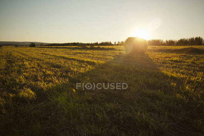 Hay stack on green field in backlit — Stock Photo